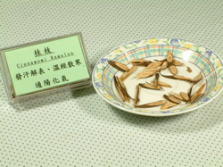 桂枝-Dr. Yang藥材小檔案