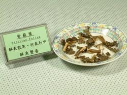 紫蘇葉-Dr. Yang藥材小檔案