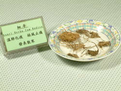 細辛-Dr. Yang藥材小檔案