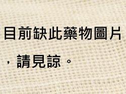 烏賊骨(海螵蛸) -Dr. Yang藥材小檔案